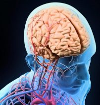 Stopping Exercise Leads to Brain Blood Flow Issues